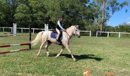 Pretty Welsh Pony on HorseYard.com.au