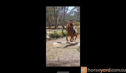 Charlie on HorseYard.com.au