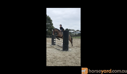 Free Lease Talented Mare  on HorseYard.com.au