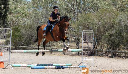 Shory Park Smack That - 16.2hh 12yo Unraced TB Gelding on HorseYard.com.au