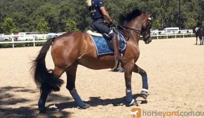 Wanted Beginners Horse wanted on HorseYard.com.au