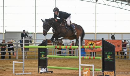 Perfect Schoolmaster Showjumper on HorseYard.com.au