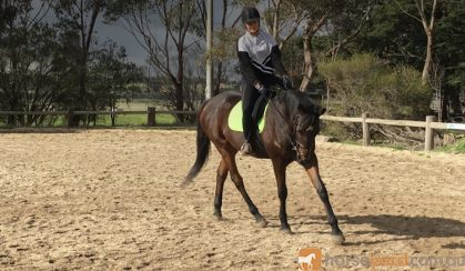 Handsome TB Gelding on HorseYard.com.au