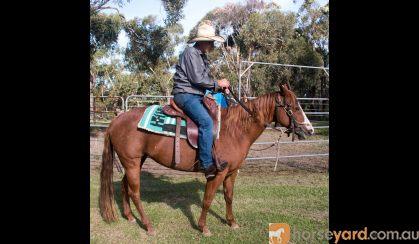 Quarter Horse Mare, Rosas Para Jacqui on HorseYard.com.au