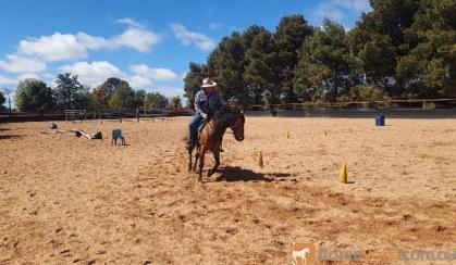 Woodstock Sergeant - Stunning Australian Sock Horse Gelding 11yo Buckskin - Joey on HorseYard.com.au
