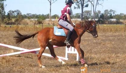 Competitive childs mount- Jump, event, dressage, show on HorseYard.com.au