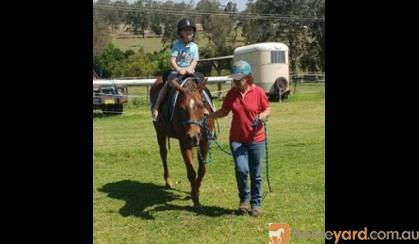 quarter pony  on HorseYard.com.au