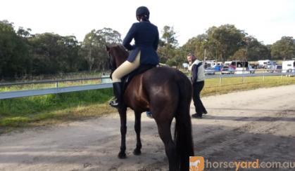 Stunning Black Warmblood Mare on HorseYard.com.au
