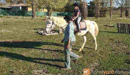 Gracious Galloway on HorseYard.com.au