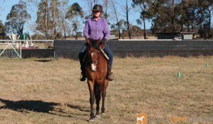 Canterbury TB Mare on HorseYard.com.au