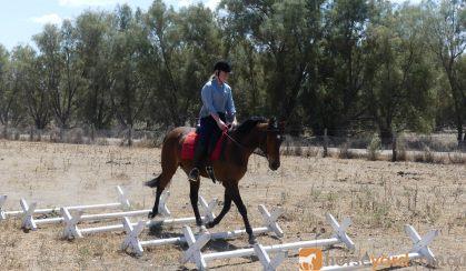 Stunning ASH x Filly on HorseYard.com.au