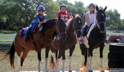 2005 Bay Paint. Beginner-safe kid's dream horse! on HorseYard.com.au