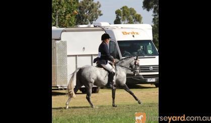 Show Hunter Pony on HorseYard.com.au