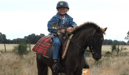 Beautiful Pony Mare on HorseYard.com.au