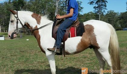 Prince on HorseYard.com.au