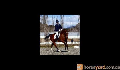 Rhapsody Hit on HorseYard.com.au