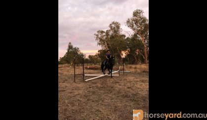 Eventing Prospect- All Rounder on HorseYard.com.au