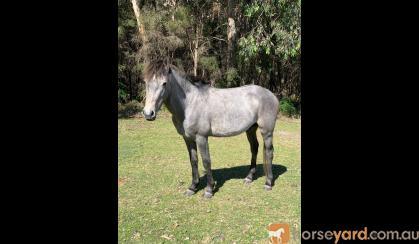 Brumby Colt on HorseYard.com.au