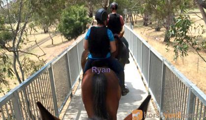 Sweet, sensible gelding. on HorseYard.com.au