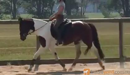 Stunning Pinto Mare on HorseYard.com.au