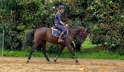 PRICE REDUCED FOR QUICK SALE on HorseYard.com.au
