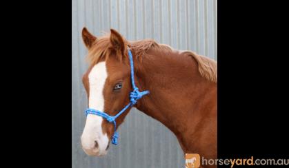 Rope Halters on HorseYard.com.au