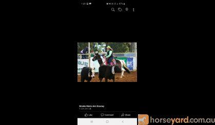 Roxy on HorseYard.com.au