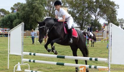 Stunning Black Andalusian x TB mare on HorseYard.com.au