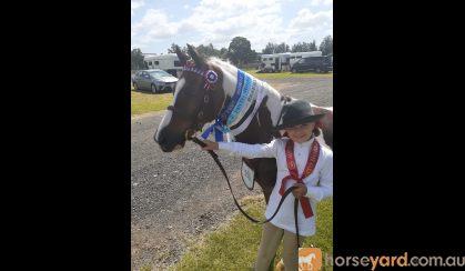 Educated Show Hunter Pony - 4th Novice Show Hunter Class Sydney Royal 2021 on HorseYard.com.au