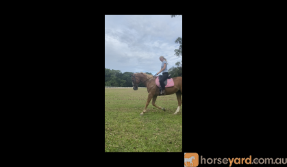 Everything you've ever wanted on HorseYard.com.au