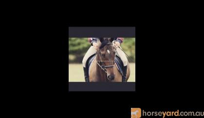 Perfect Project Horse  on HorseYard.com.au