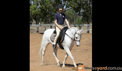 Beautiful Pony looking for new home. on HorseYard.com.au