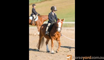 Great Second Pony on HorseYard.com.au