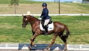 Superstar Dressage Mare on HorseYard.com.au
