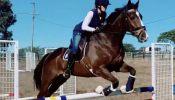 SUPERCONDUCTOR on HorseYard.com.au