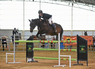 Perfect Schoolmaster Showjumper on HorseYard.com.au