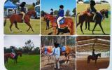 13hh 15 yrs old Educated Mare on HorseYard.com.au (thumbnail)