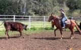 SENSIBLE ALLROUNDER QH GELDING on HorseYard.com.au (thumbnail)