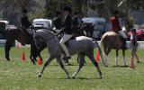 Hillen Rossington on HorseYard.com.au (thumbnail)