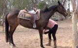 Pretty Aust Stud Book Mare + VIDEO+ on HorseYard.com.au (thumbnail)