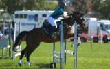 Show jumping Thoroughbred on HorseYard.com.au (thumbnail)