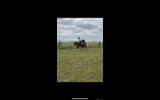 Chestnut schoolmaster  on HorseYard.com.au (thumbnail)