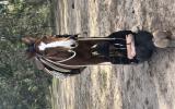 Quarter horse gelding  on HorseYard.com.au (thumbnail)