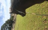 Filly For Sale upon weaning. on HorseYard.com.au (thumbnail)