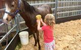 Beautiful Welsh mare on HorseYard.com.au (thumbnail)