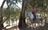 Quiet Percheron Mare, confidence builder on HorseYard.com.au (thumbnail)
