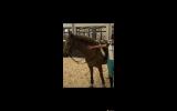 Splash on HorseYard.com.au (thumbnail)