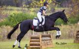 Intro Eventer/80cm SJ on HorseYard.com.au (thumbnail)