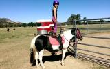 Incredabelle, Reg part-bred, been there done that taught lots of kids to ride! on HorseYard.com.au (thumbnail)