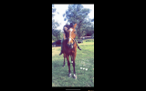 Beautiful Gelding for sale  on HorseYard.com.au (thumbnail)